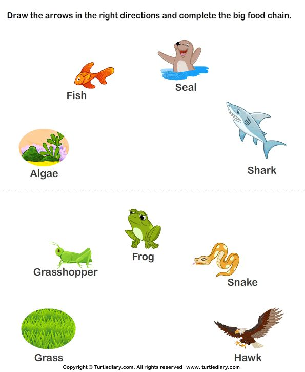 Worksheet Food Webs For Kindergarten Students best 25 food chain worksheet ideas on pinterest chains 16