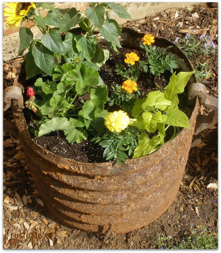 Rusty drain pipe planter hmmm have an old culvert out for Garden sectioning ideas