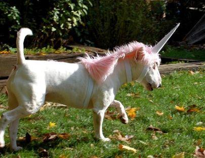 25 disfraces de perro