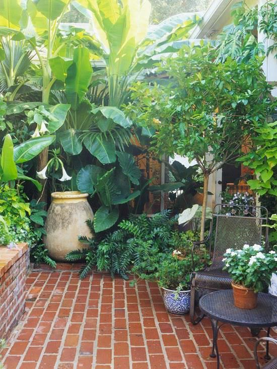 use tropical plants and trees, and height to gain a lush feeling in a small patio space…