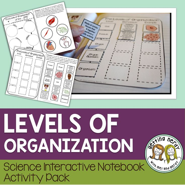 introduction to cell tissue and organ Cells, human body, organism, organelle, organ system, organ, tissue, atom,  ( complete lab activity to introduce the microscope and its use.