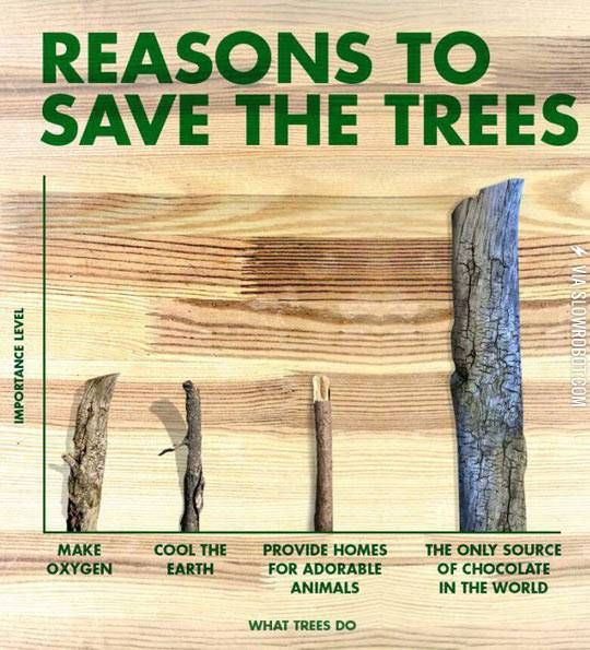 The most important reasons why to save trees.