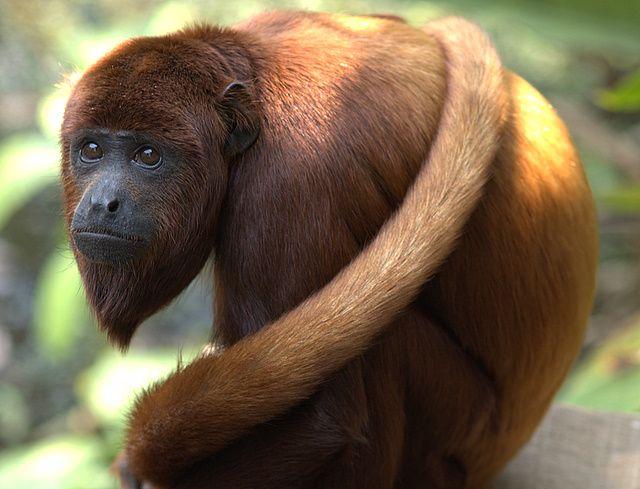 Rain Forest – Animals of the Amazon