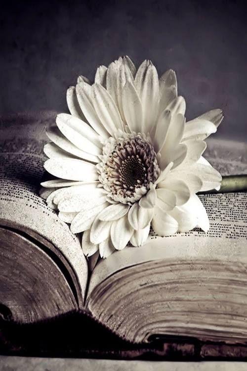 « Le roman doit détruire les certitudes. » Milan Kundera.