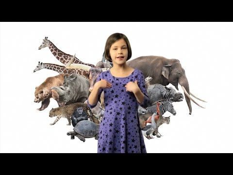 ASL Animals Song Lesson for Kids - Learn how to sign Animals with Fireese - YouTube
