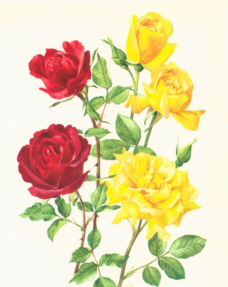 Exceptionnel Plus de 25 idées adorables dans la catégorie Fleurs hollande sur  ON52
