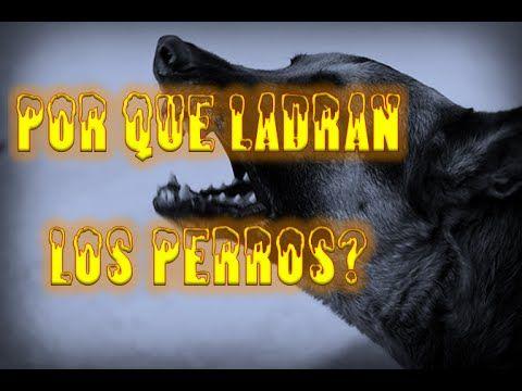 Relatos de terror Por que ladran los Perros