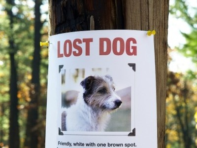 48 best DOGS - LOST AND FOUND images on Pinterest Animal welfare - lost pet poster