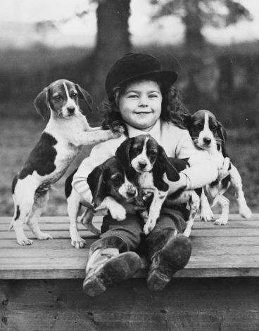 A young hunt follower makes friends with beagle pups too young to join in the hunt, 1938. Photo: Len Blandford, Getty Images / Hulton Archive