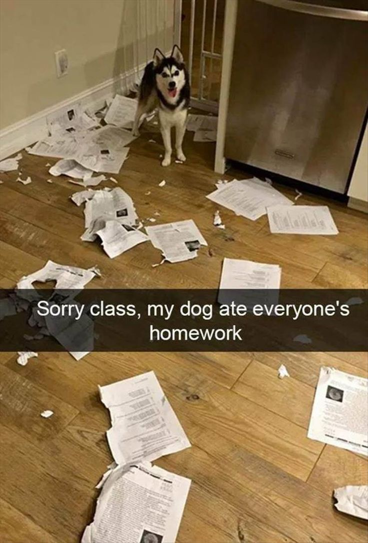 Funny Animal Pictures Of The Day 24 Pics – Funny Pictures