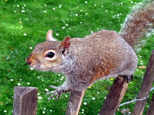 a london squirrel