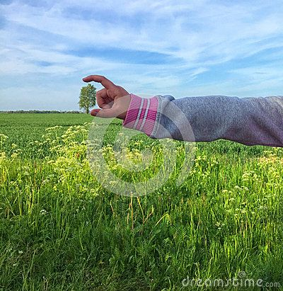 A distant tree in a field in a child`s hand.