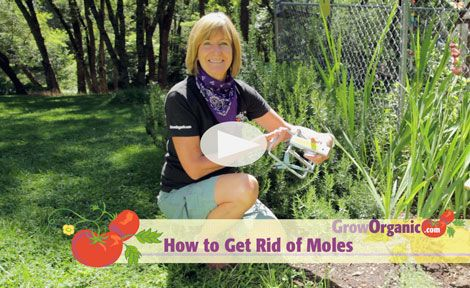 How To Get Rid Of Rats In Backyard How To Get Rid Of Rats