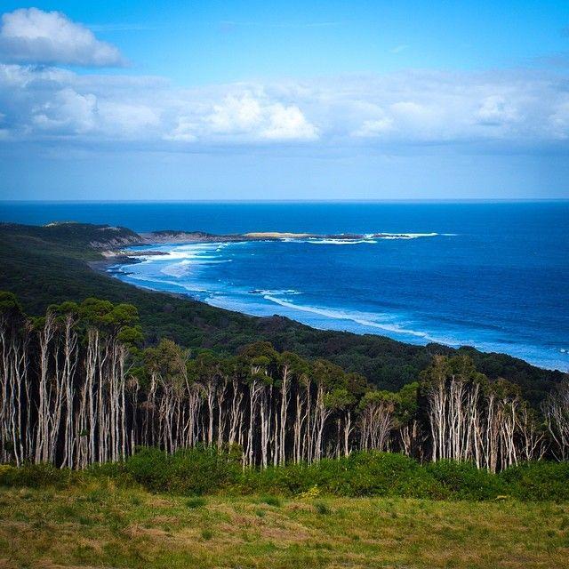The coastal forest of Grassy, on Tasmania's King Island. #grassy #kingisland #KingIslandWed