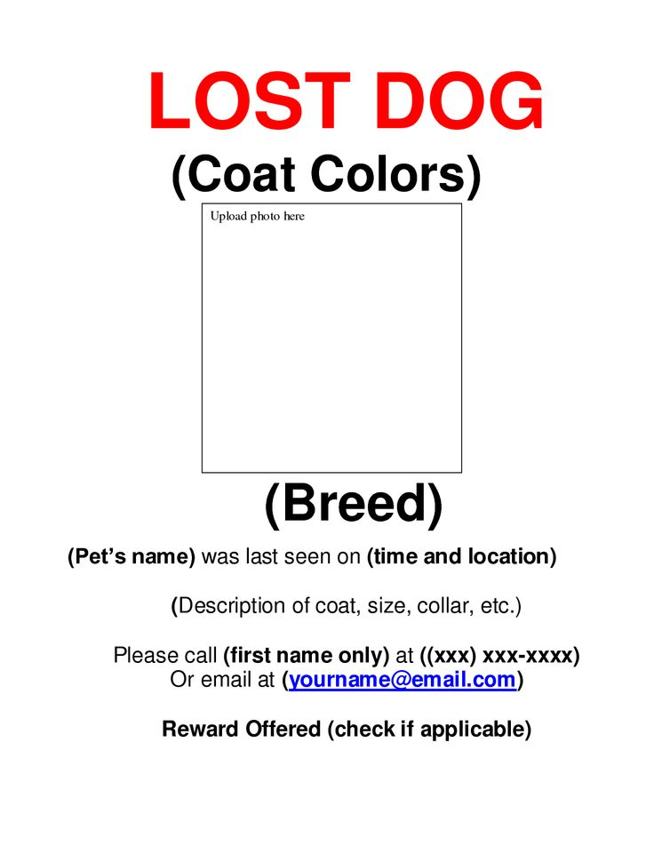 Lost Dog Flyer Template Pet Adoption Flyer Template Or Social Media