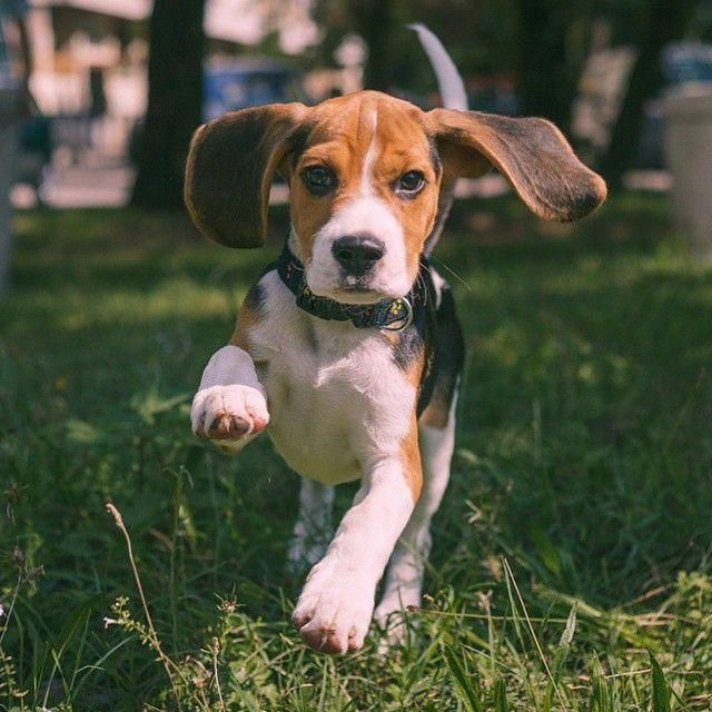 Find Out Additional Information On Beagles Check Out Our Web Site