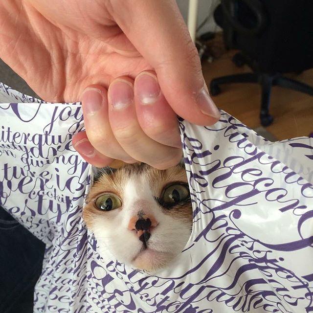 Help meeee #derp funny calico kitten