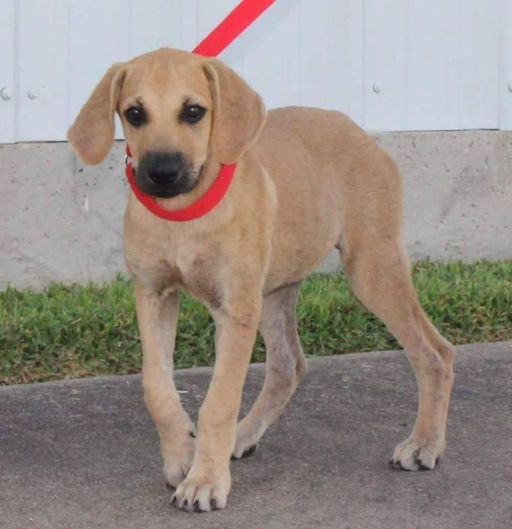 Must see Mouth Cur Black Adorable Dog - ee17b6d5e046baece1933cfa91860a5f--black-mouth-cur-wish-list  Snapshot_551695  .jpg