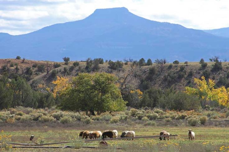 #handwoven.  The sheep of Ghost Ranch, NM.