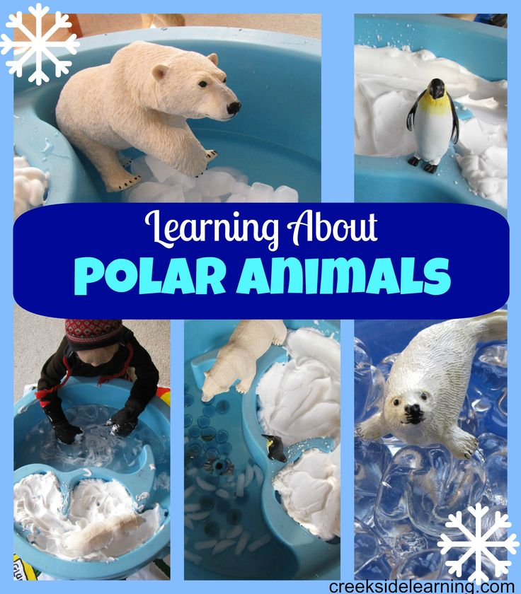 Resources for learning about polar animals and Safari Ltd give-away:  the animal figure or TOOB of your choice. Enter to win at Creekside Learning.com.