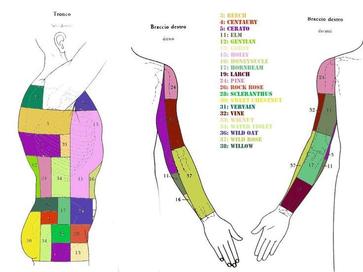 kramer-busto-braccio-dx.jpg (909×682)