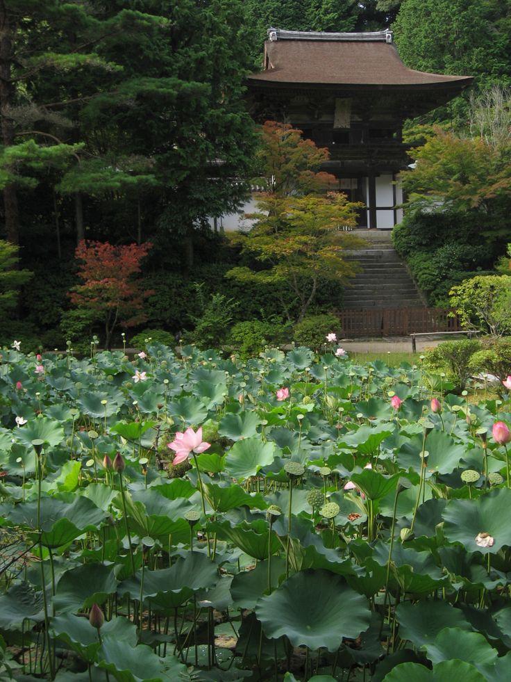 68 Best Japanese Gardens Images On Pinterest