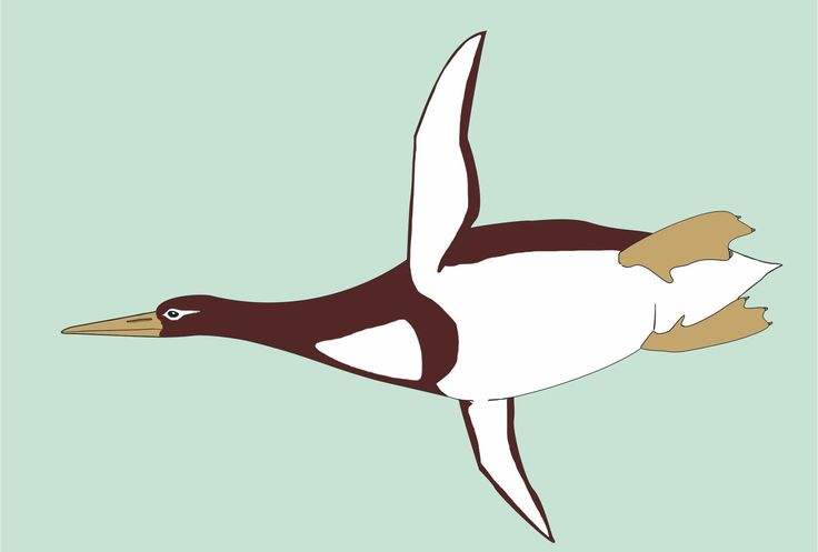 Ancient Penguins Were Giant Waddling Predators