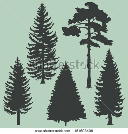 vector set of coniferous trees silhouettes
