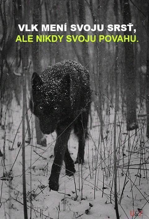 vlk mění svou srst, ale nikdy svou povahu.