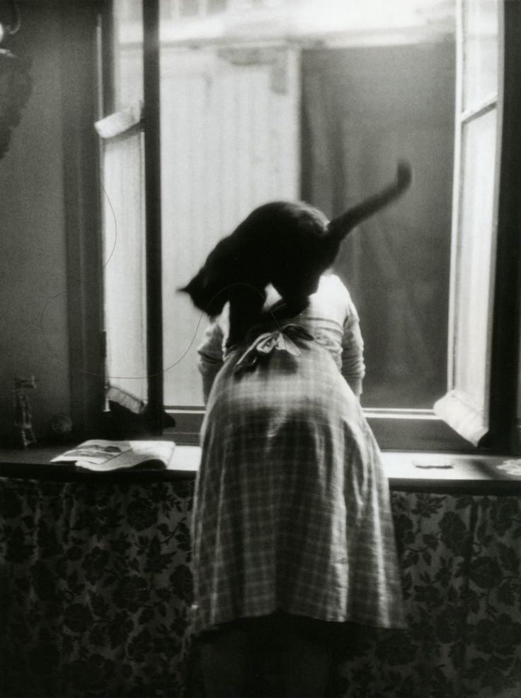 "From ""Les chats"", Paris, 1954 // Willy Ronis"