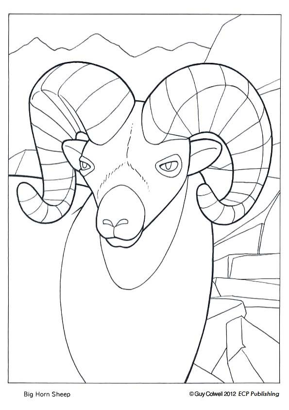 kiyarim c animals coloring pages - photo#10