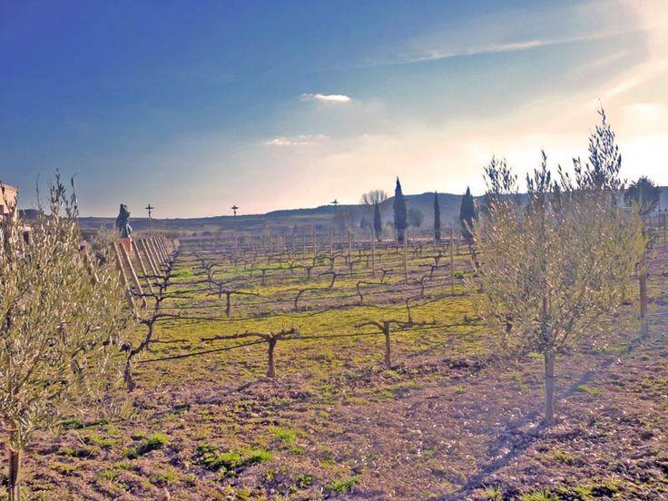 Ribera del Duero. Bodega Emina  (Artículo: Valladolid. De majadas y majuelos está hecha la Ribera del Duero)
