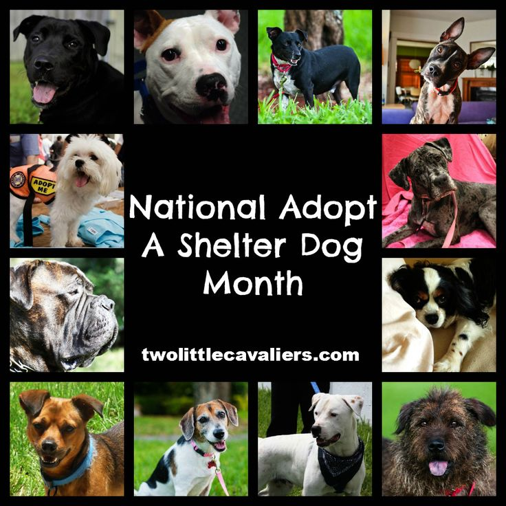 national adopt a shelter dog month For the Dogs