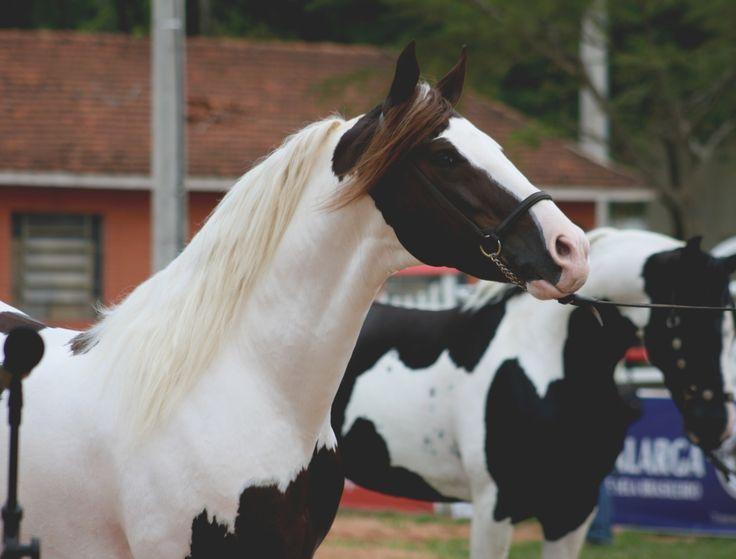 34ª Exposição Nacional do Cavalo Mangalarga | Escola do Cavalo