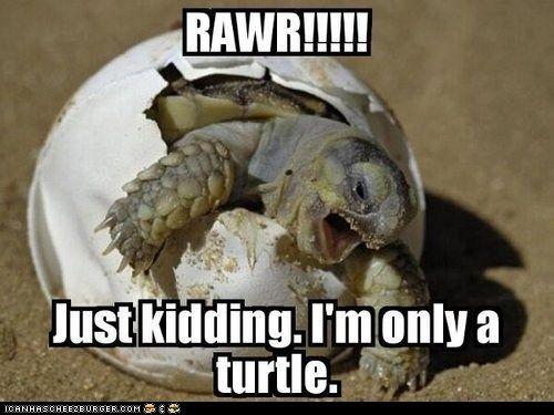 Rawr!Rawr, Laugh, Funny Stuff, Humor, Things, Funny Animal, Smile, Sea Turtles, Baby Turtles