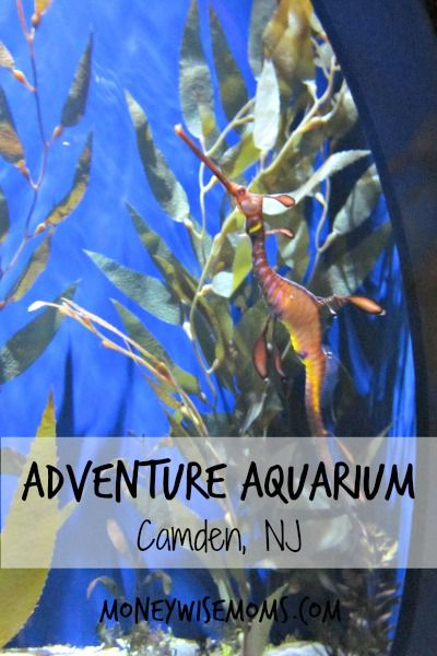 Adventure Aquarium in Camden, NJ (minutes from Philadelphia) - Fabulous #familytravel destination