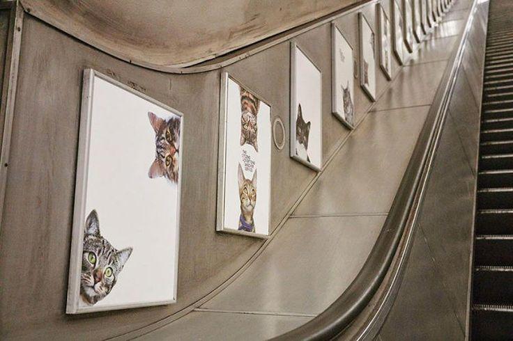Meow-meow! Или как котики украсили лондонское метро. https://www.facebook.com/thearchitectpro/posts/1120182168059768