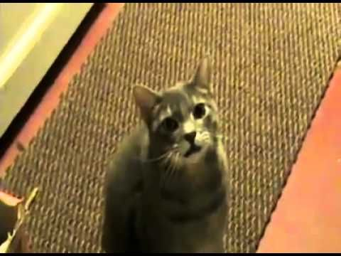 """If a Cat Said """"Hey"""" Instead of """"Meow""""... Funny - YouTube"""