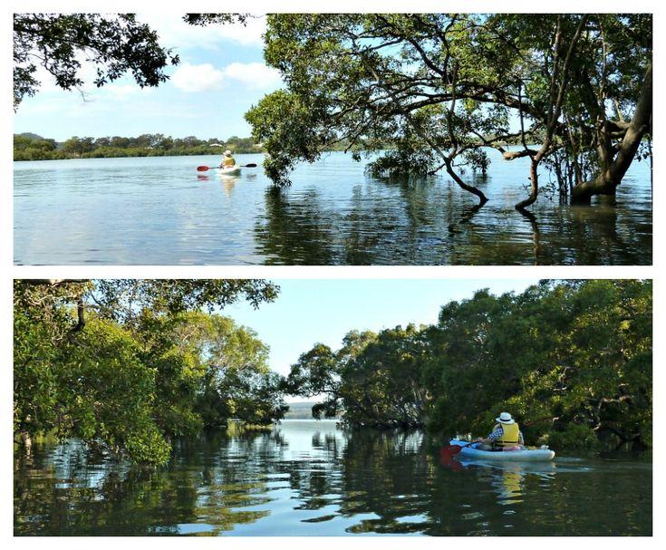 Kayaking through the mangroves in the Bay off Brisbane
