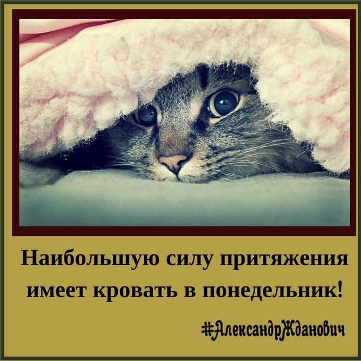 Все так!  #АлександрЖданович #позитив #юмор #картинки #понедельник