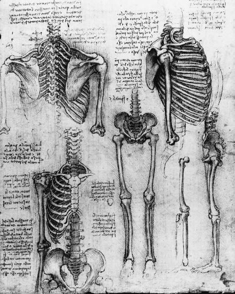 Leonardo da Vinci / Skeleton study.