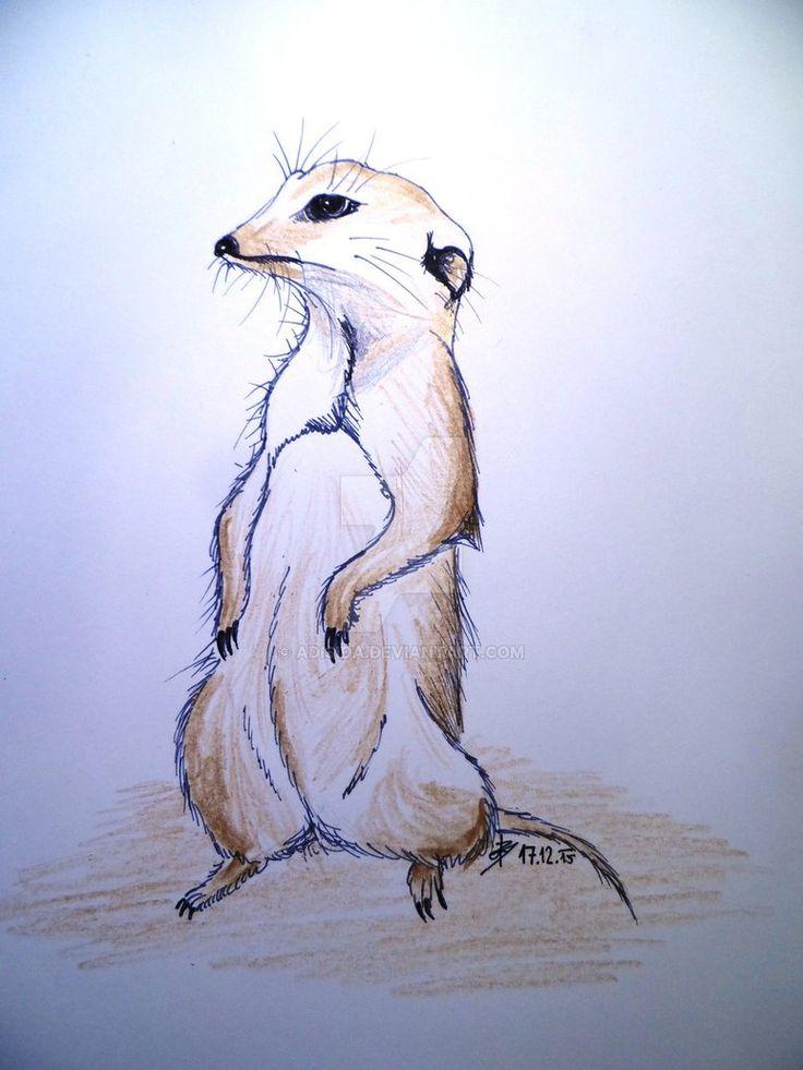 Suricata suricatta (Surikata) by Adisida on DeviantArt