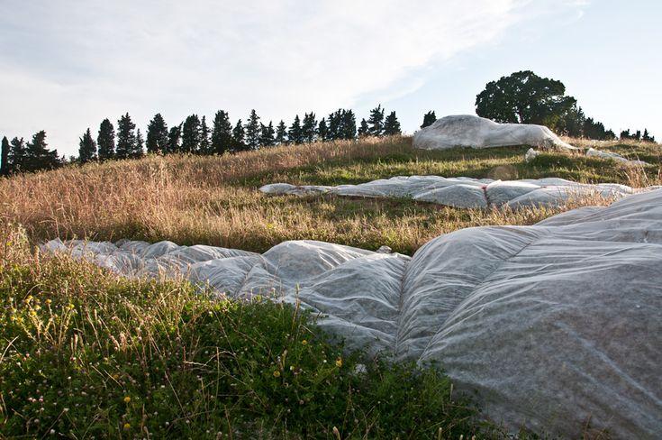 Costellazione del Toro, Luca Serasini, IV Biennale di Montegemoli, Toscana, 2011.