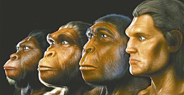 """22. Nos adentramos dentro del género homo, donde se agrupan todas las especies consideradas """"humanas"""".Se caracteriza por ser bípedo, con pies no prensiles y su primer dedo alineado con los restantes. Presenta hipercefalización y una verticalización completa del cráneo.Lo que nos diferencia de los otros es el tamaño del cráneo y la capacidad de crear herramientas y conservarlas para un futuro uso."""