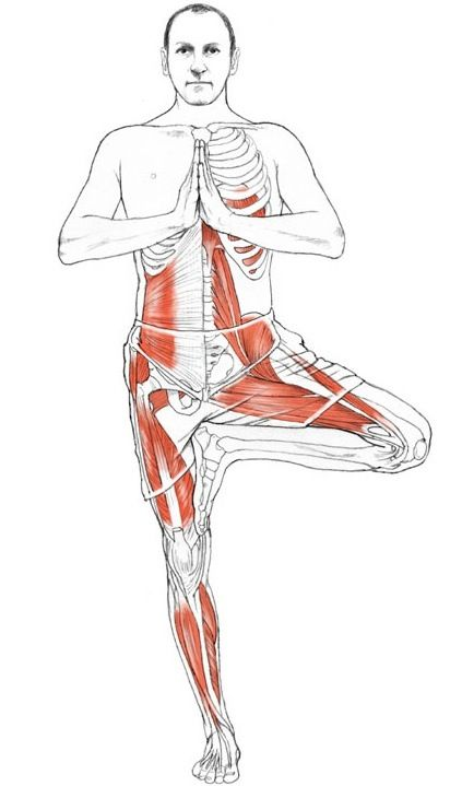 EXERCISE ANATOMY: Vrikshasana (Tree Pose). Benefits – brings balance and equilibrium to the mind, improves concentration, can help relieve symptoms of sciatica, strengthens the legs, opens the hips.