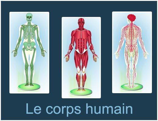 Un jeu quiz sur le corps humain : digestion, respiration, système musculaire, squelette et système nerveux. France TV Education : http://education.francetv.fr/activite-interactive/le-corps-humain-o24139