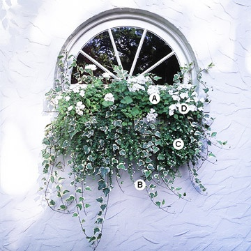 Beautiful way to use a window box to dress up an oddly shaped window....  // Great Gardens & Ideas //Windows Boxes Flower, White Gardens, White Flowers, Garden Ideas, Windowboxes, Add Elegant, Beautiful, Flower Boxes, Window Boxes