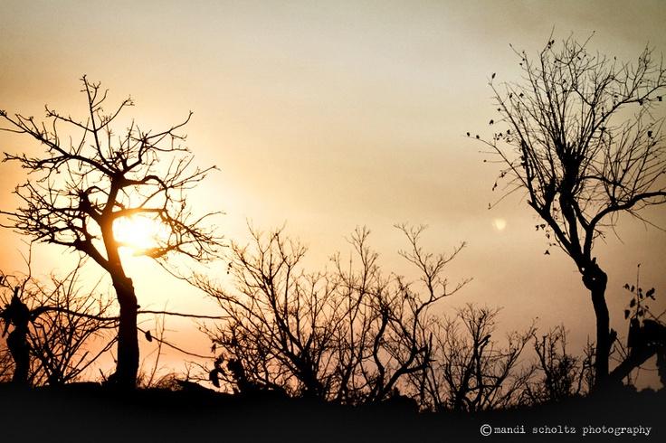 african sunset - mandi scholtz photography