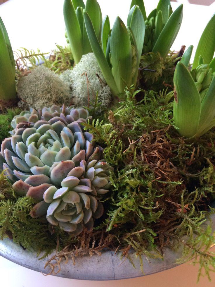 Älskar hyacinter...