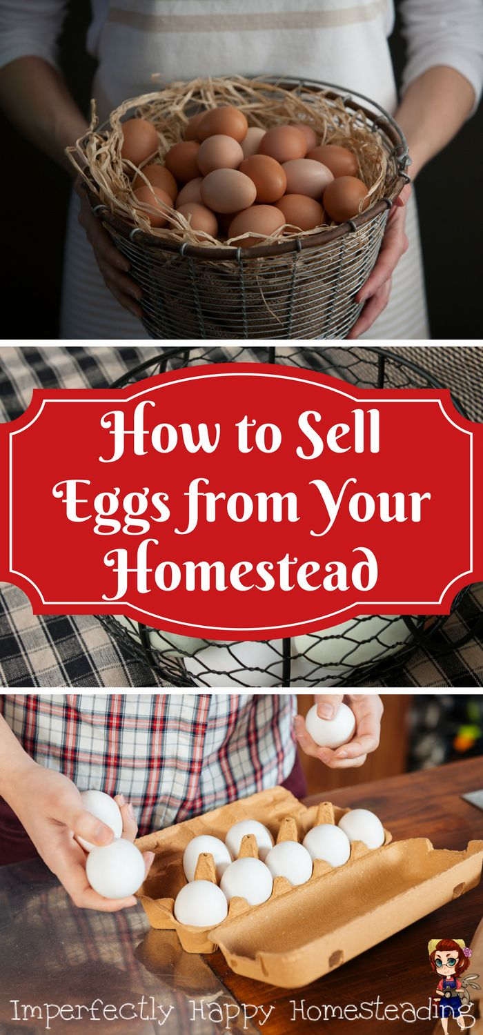 How to Sell Eggs from Your Homestead or Hobby Farm.